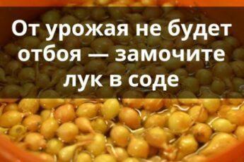 От урожая не будет отбоя — замочите лук в соде