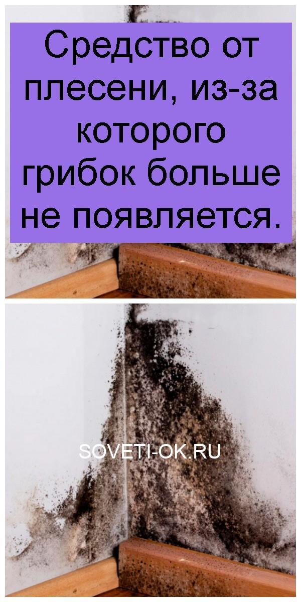 Средство от плесени, из-за которого грибок больше не появляется 4